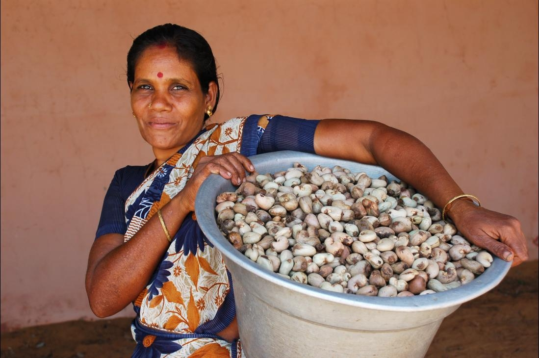 Indrani of the Naluvedapathy village, carrying cashew nuts to the processin