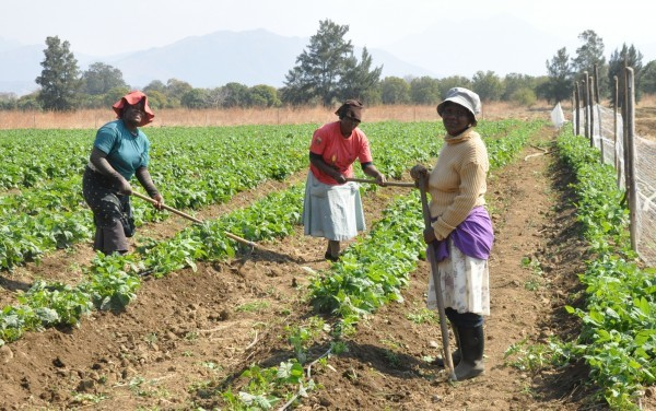 Massmart Farming