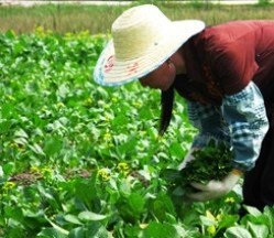 media-images-other-direct-farm-china_129824695719559271_375x216.jpg