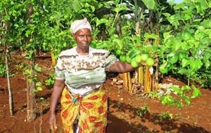 media-images-other-asda-united-kingdom-kenyan-growers_130178596025789670_300x190.jpeg