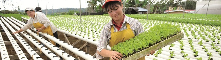 media-images-other-direct-farmwomen_130095009484322721_752x206.jpg