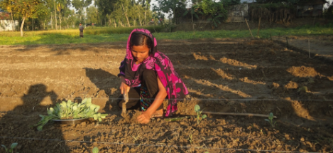 Photo of Female Asian Farmer Planting Crops