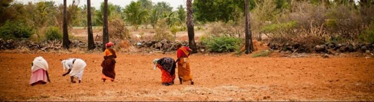 Five women are working in a field