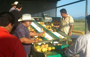 media-images-other-mexico-direct-farm_130172710081862262_300x190.JPG