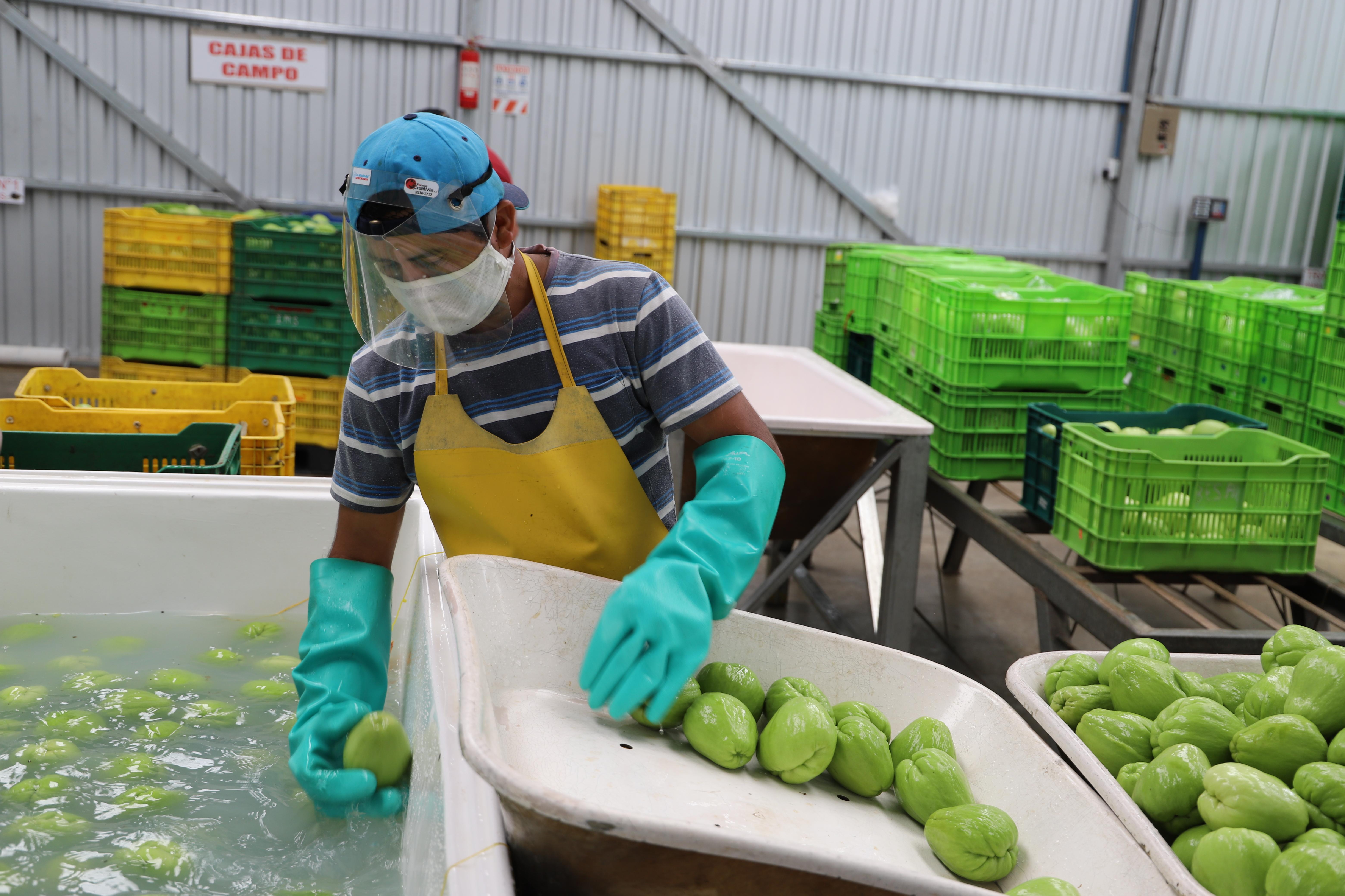 Pyme agrícola de Ujarrás se prepara para diversificar durante la pandemia