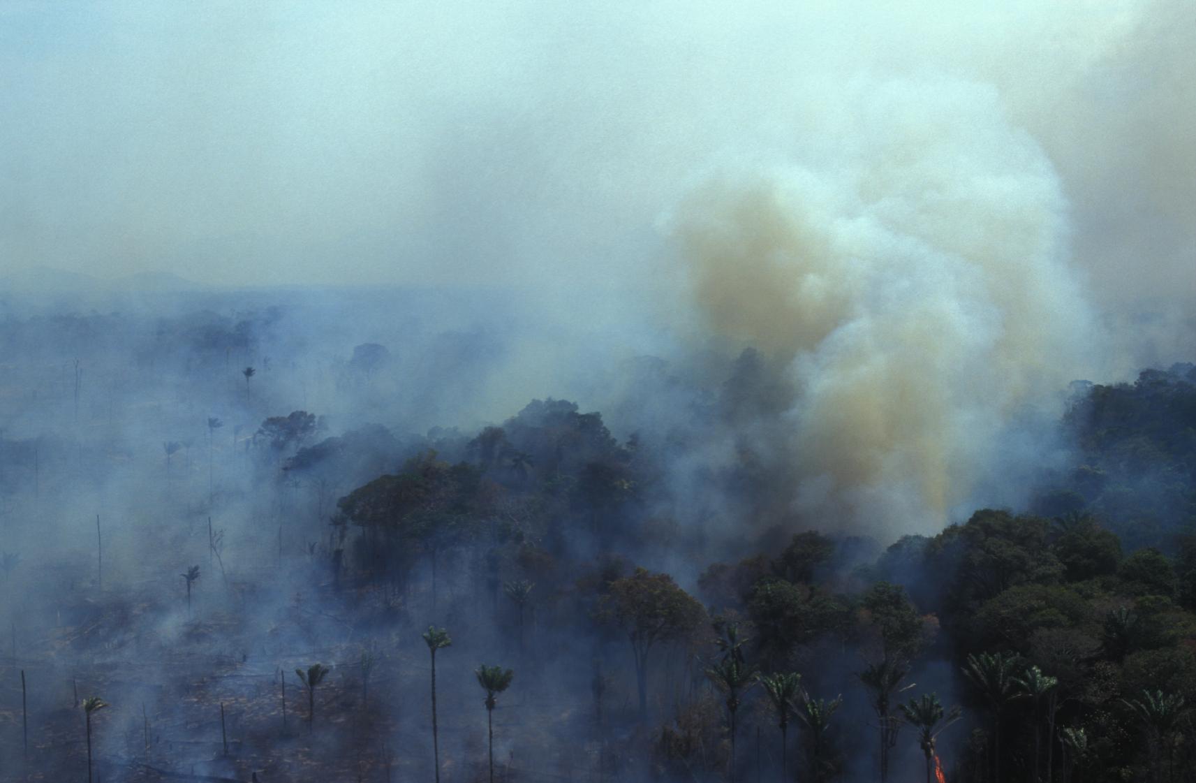 GRR: Deforestation Image