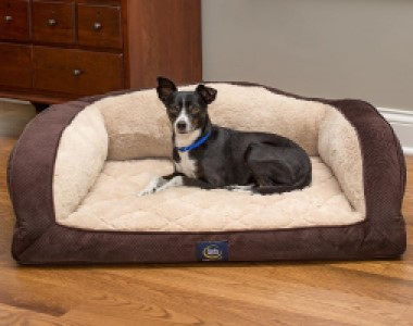 serta camelback couch bed for puppies
