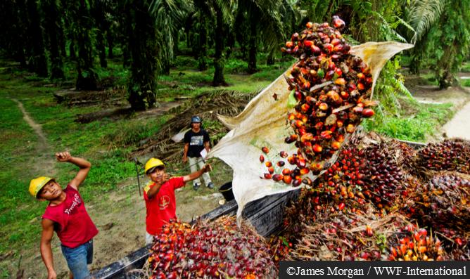 palm oil image