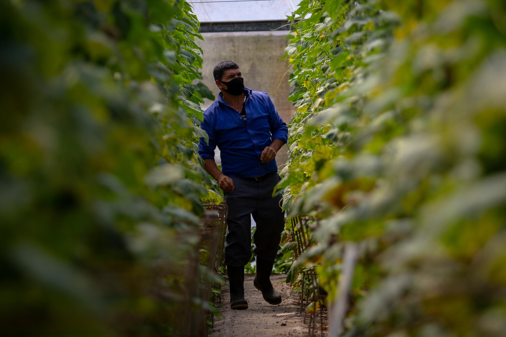 Walmart promueve cultivo bajo invernadero entre sus proveedores costarricenses 2