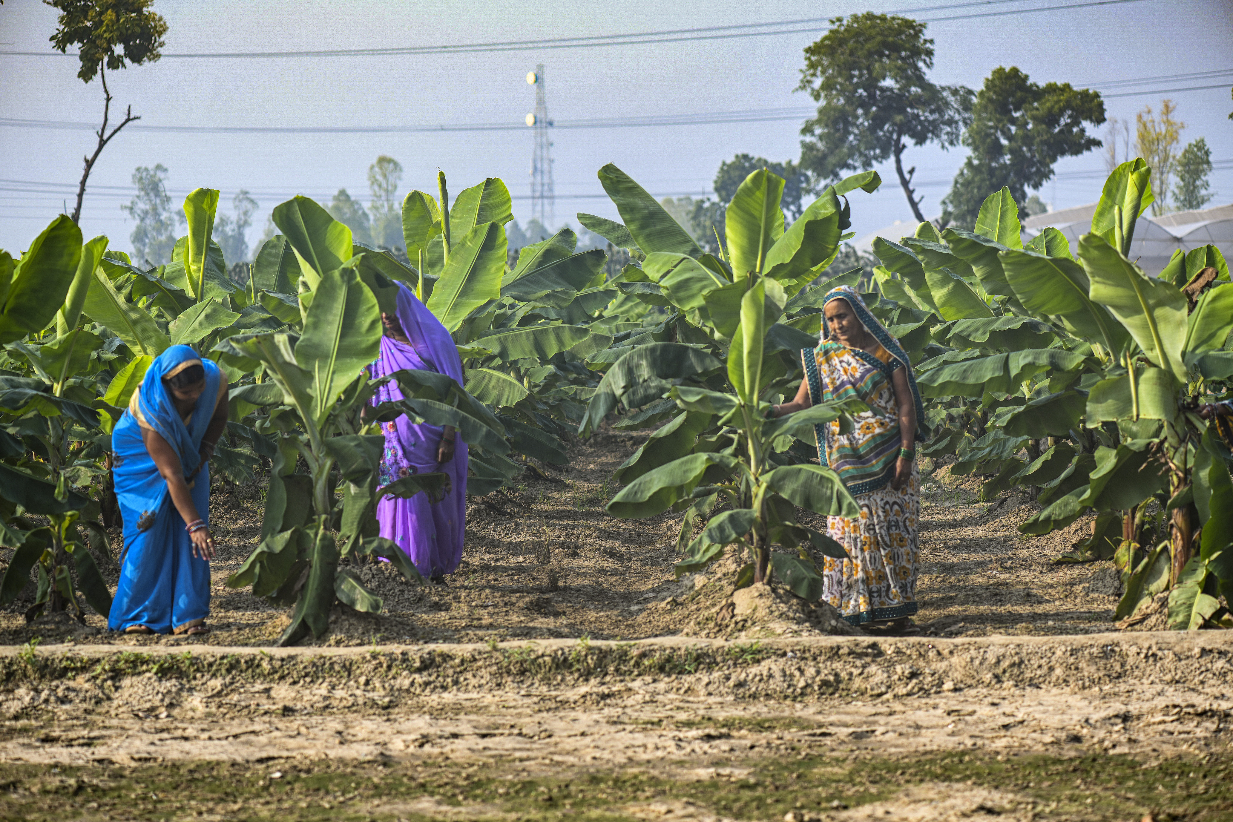 A group of women farmers in Kasimpur village