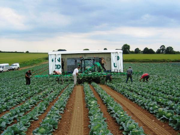 Asda rhubarb farmers John Dobson and Sons Ltd