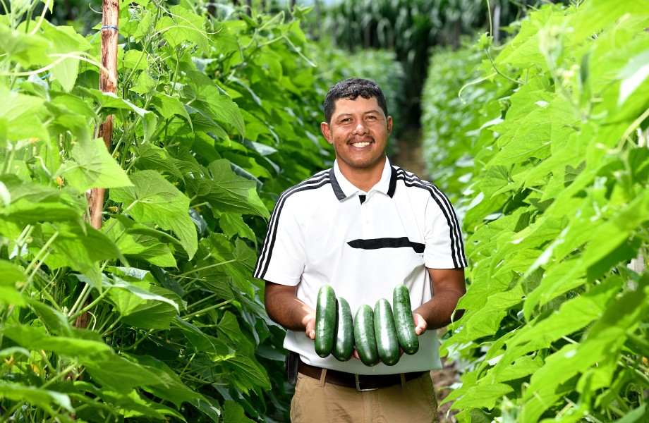 Man holding cucumbers in a field