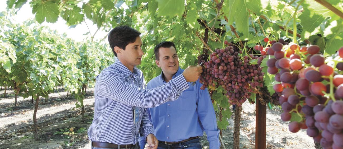 Hronis Grape Farm