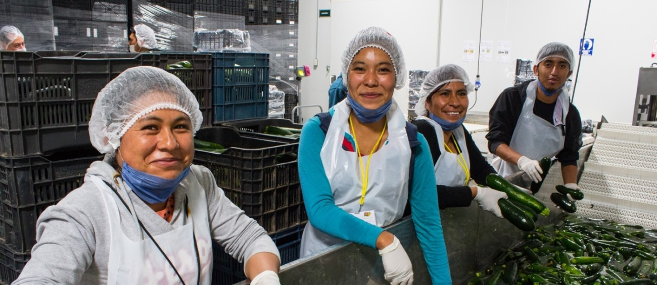 Workers washing and sorting cucumbers