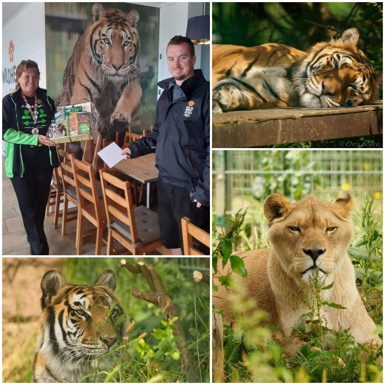 Caring colleagues help island zoo | Asda Newport Isle of Wight