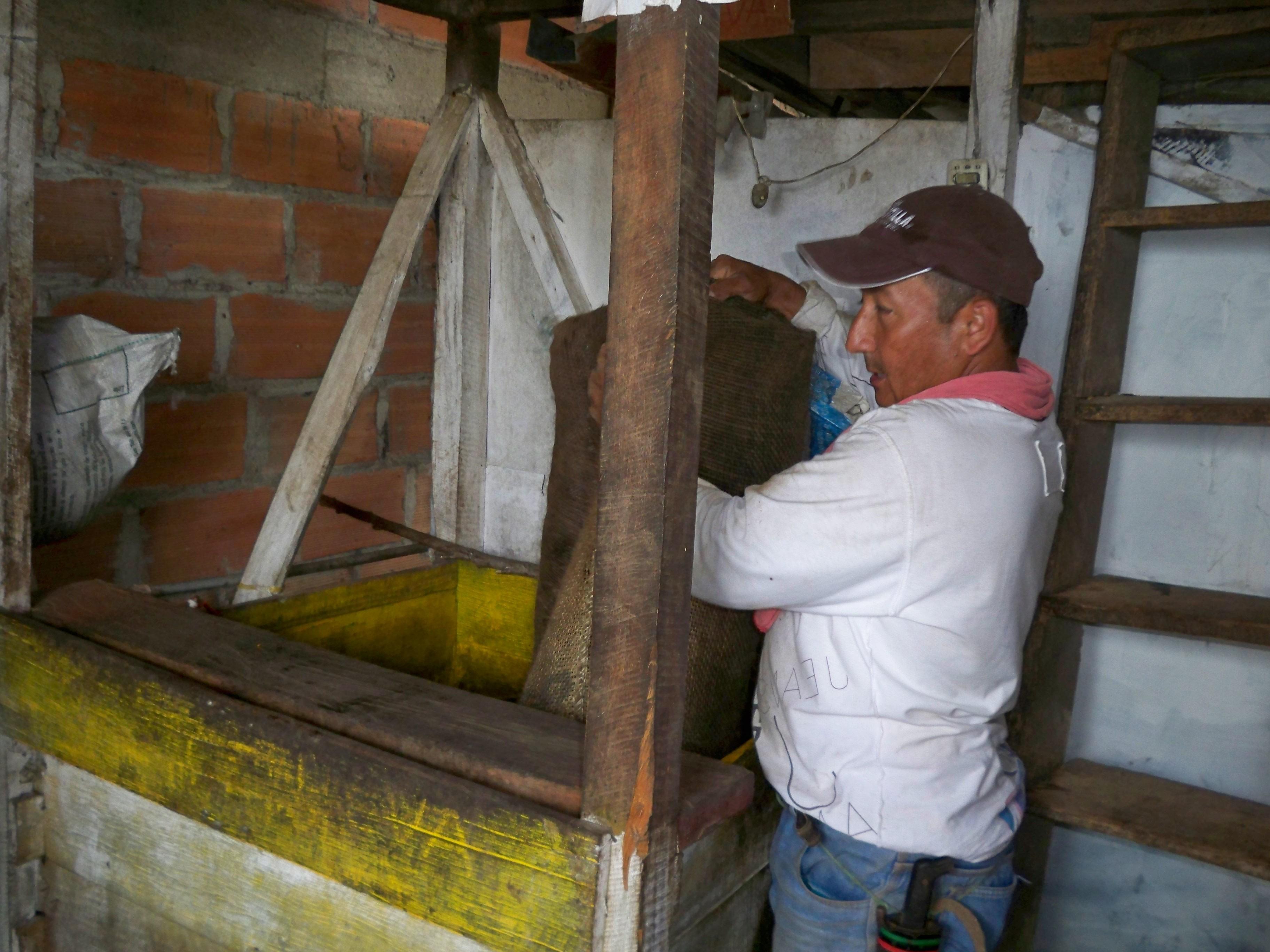A Columbian coffee farmer works