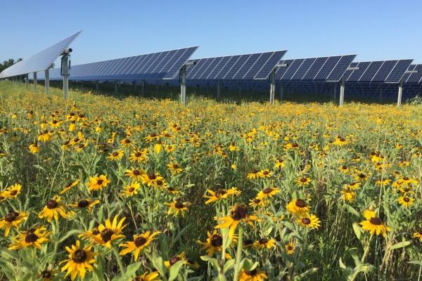Solar Panels in Field of Flowers