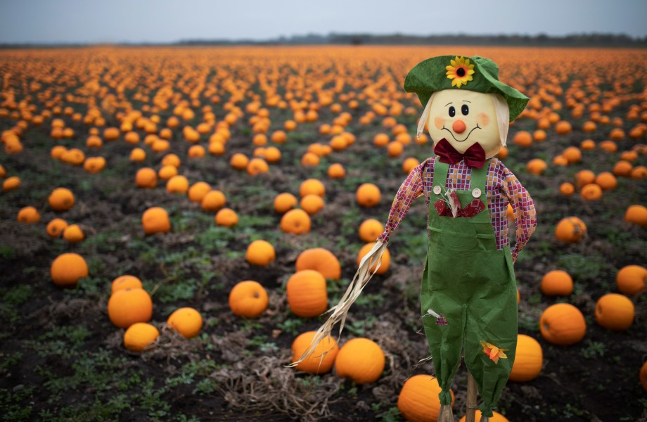 Pumpkins Scarecrow