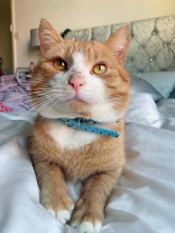 Ozzie the cat was found at Asda Hartlepool after six months