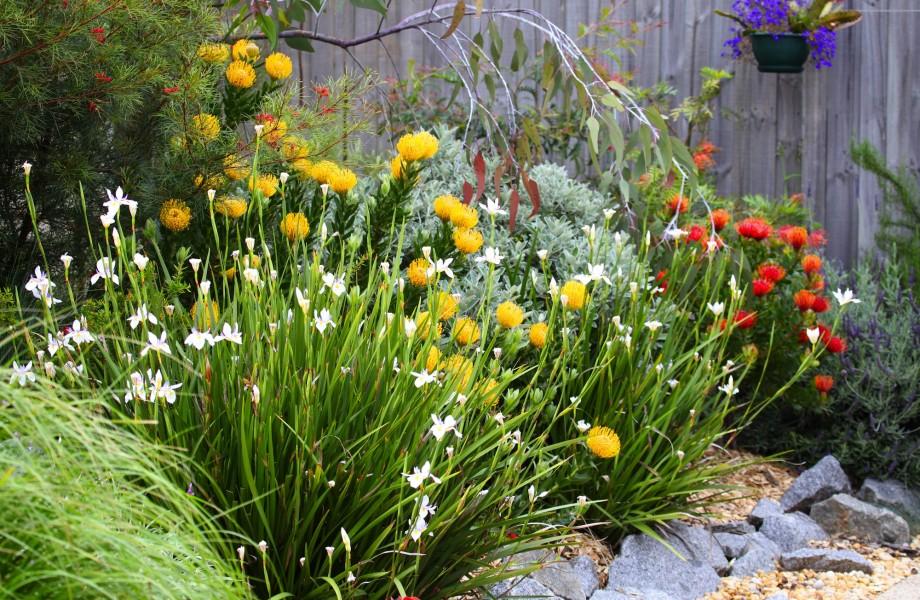 Home Garden Flower Photo