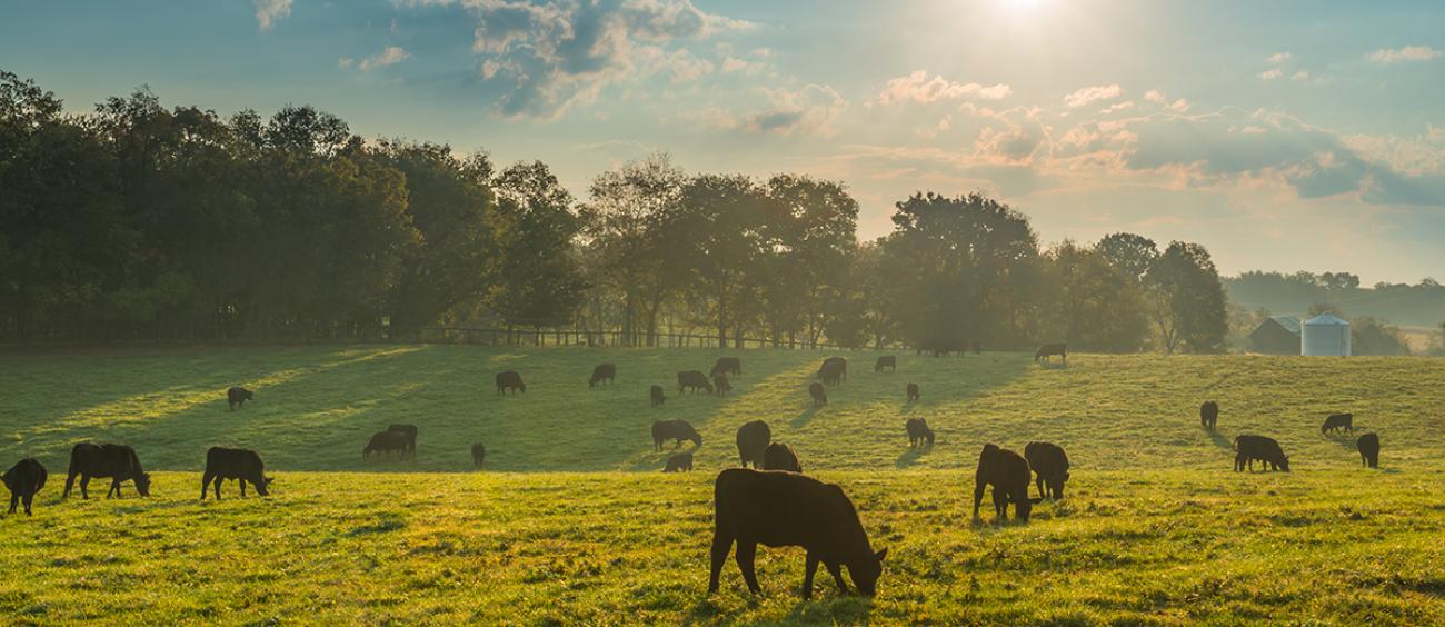 Sustainable Beef RTP Lead