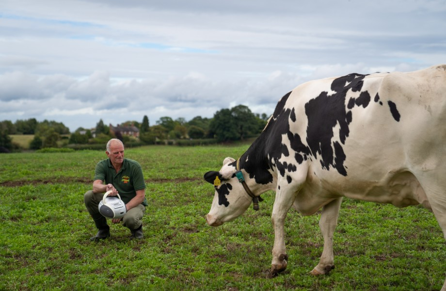 Music makes Joseph Heler's cows happier, helping produce better-quality cheese