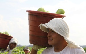 Men are carrying buckets filled with green produce on a farm