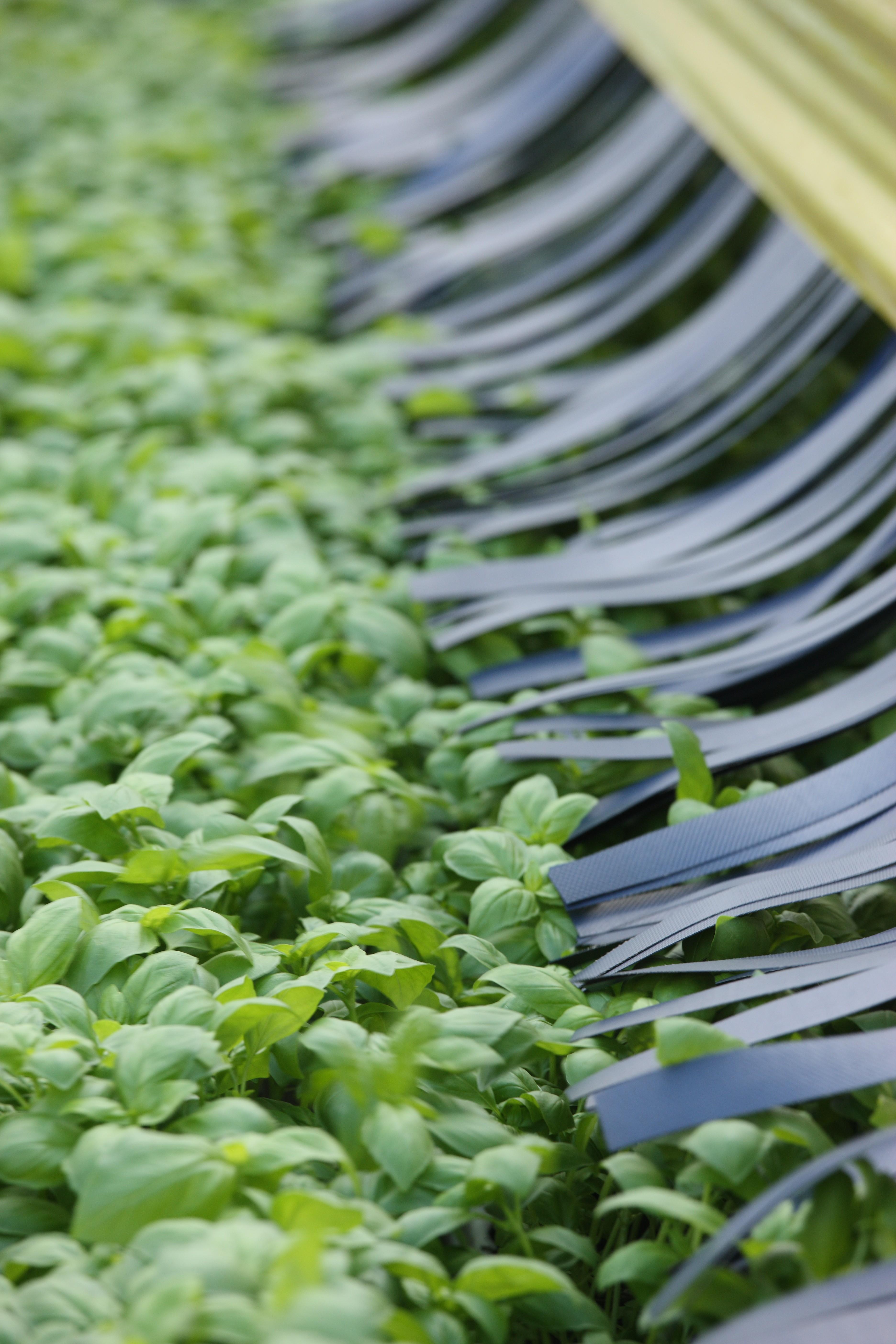Shenandoah Growers