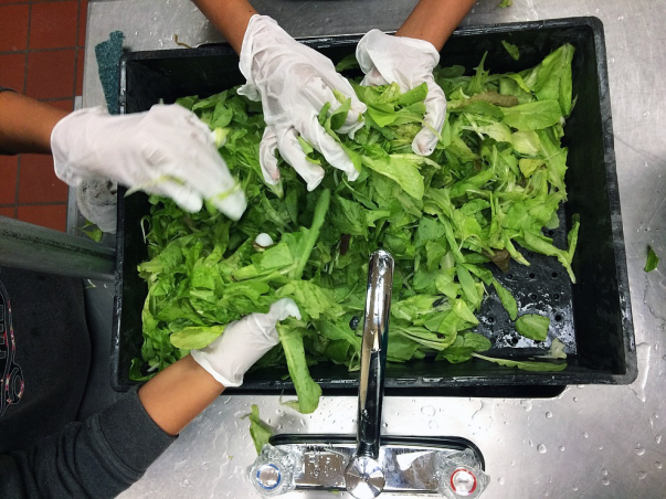 Two people wash lettuce in a kitchen