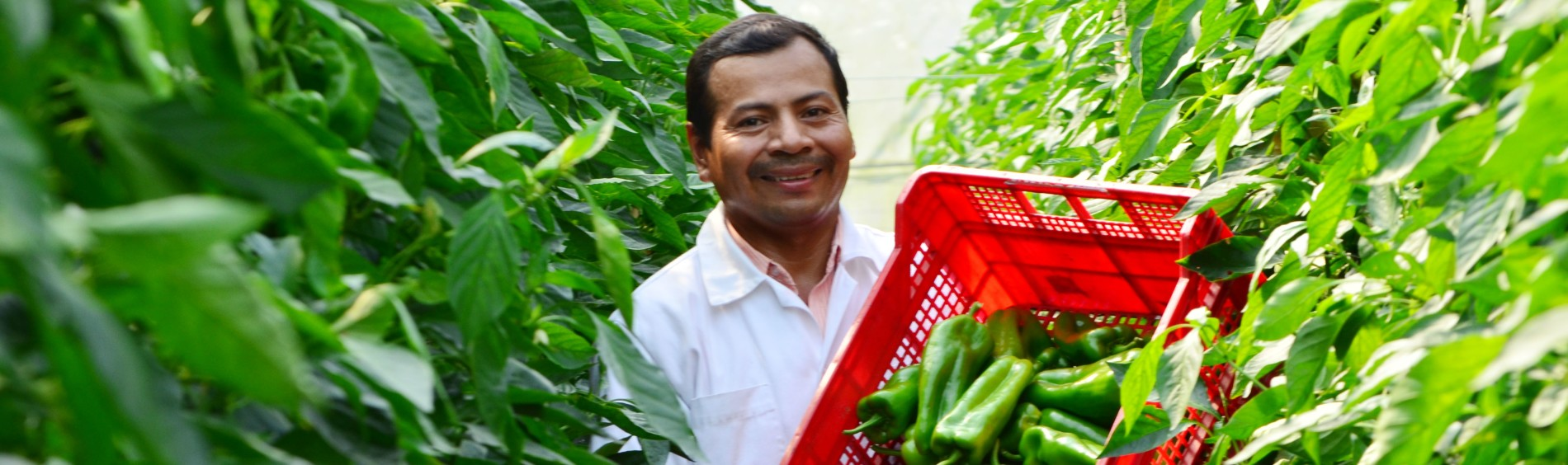 A Central America farmer holds sustainable produce