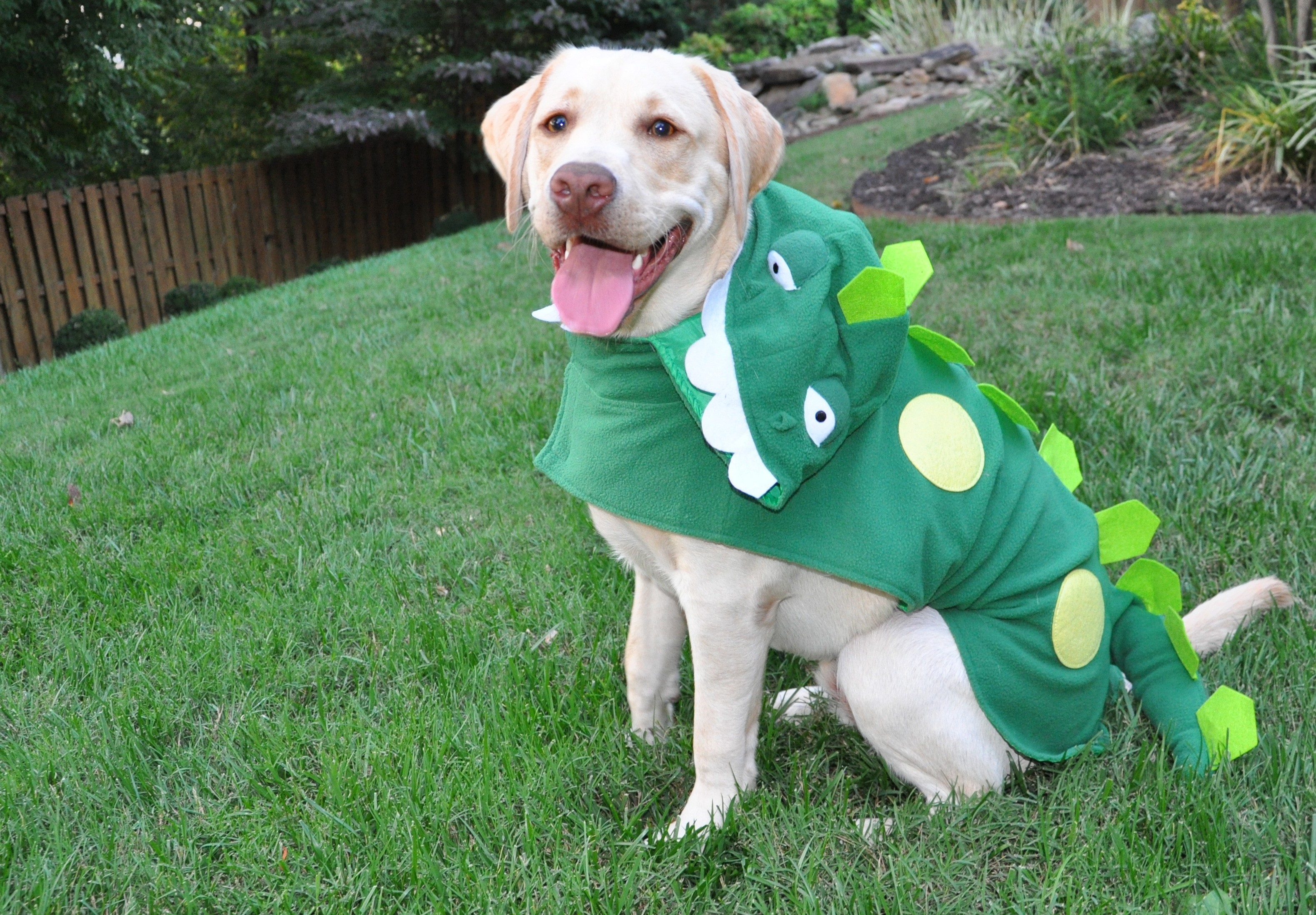 Labrador-Monster Halloween Costume