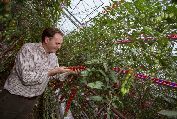 Asda tomato grower Andy Roe