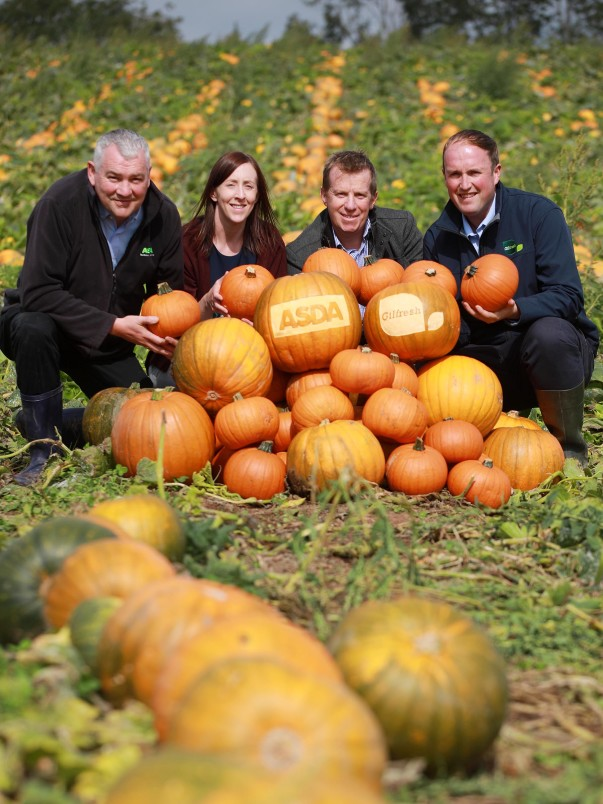 Locally-grown pumpkins from Gilfresh are on sale in Asda stores across Northern Ireland