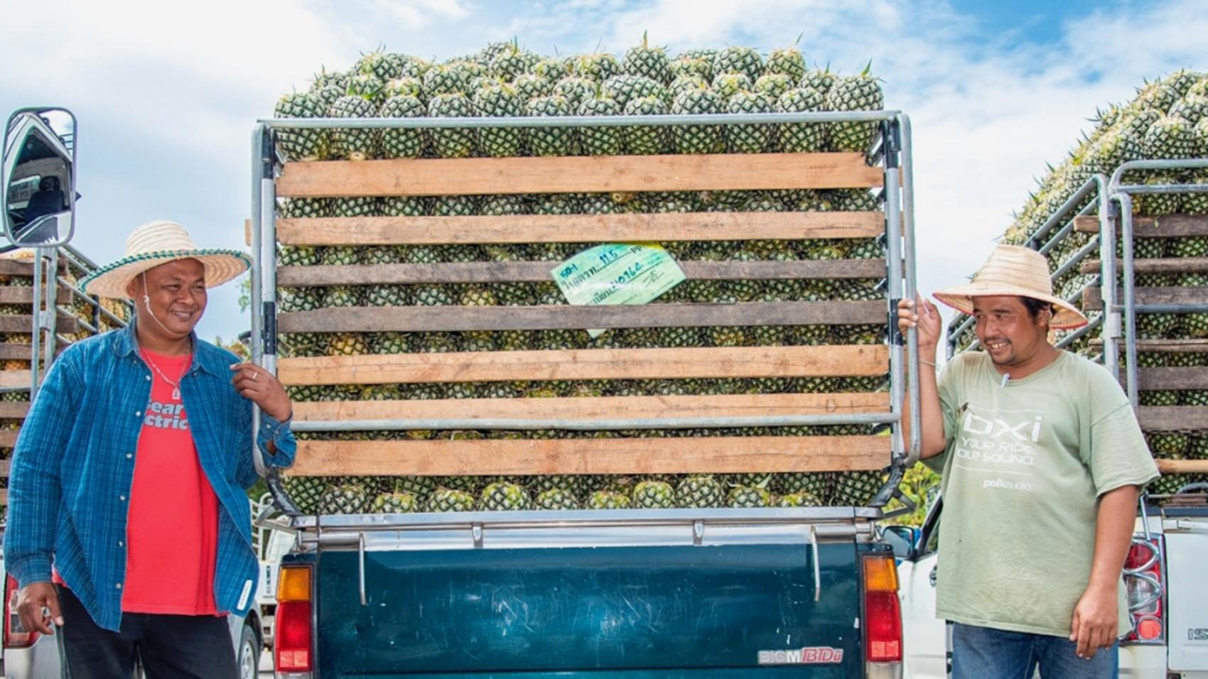 People in Supply Chain/thai-pineapple.jpg
