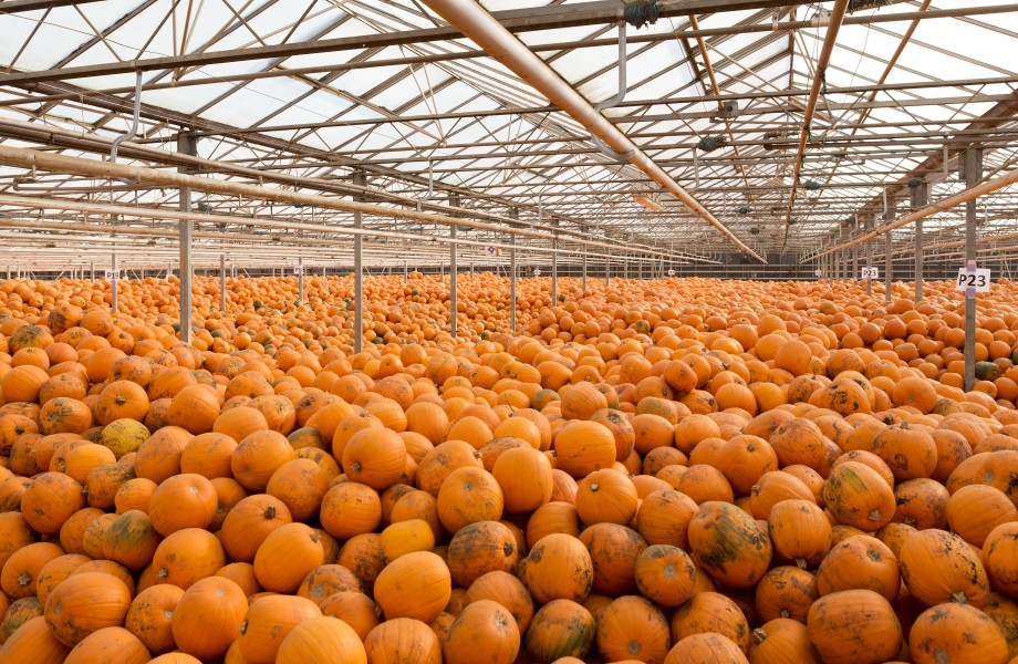 Pumpkins warehouse