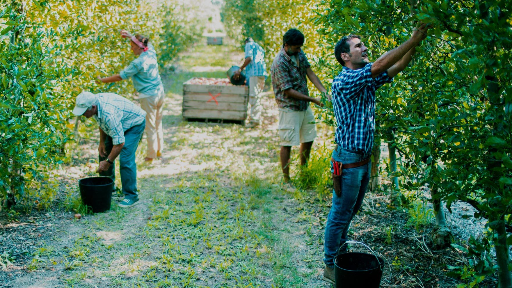 Product Supply Chain/apple-pickers.jpg