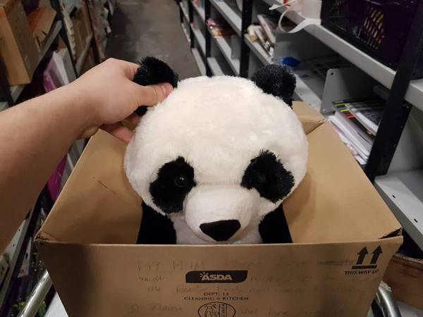 Leon with his panda from Asda Hunts Cross