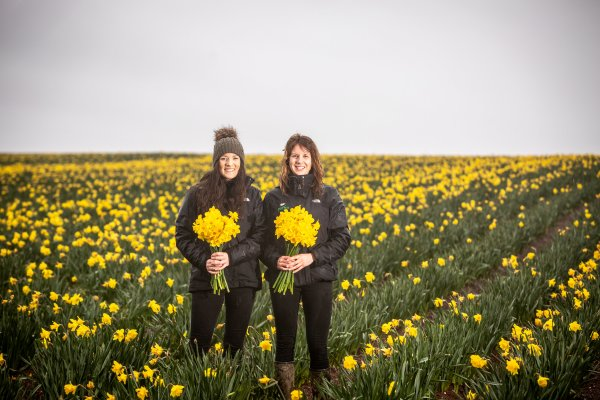 Daffodil supplier