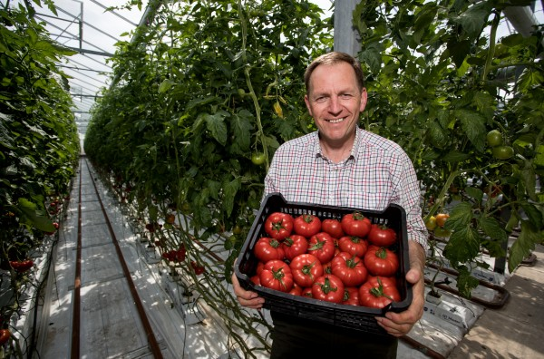 Andy and the Goutini tomatoes
