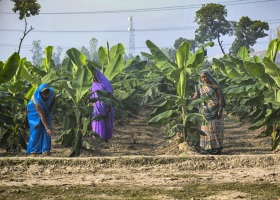 Walmart India and Walmart Foundation Announce Commitments to Support Sustainable Livelihoods for Farmers in India_2.jpg