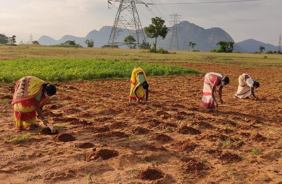 India Farm Grant Lead Image