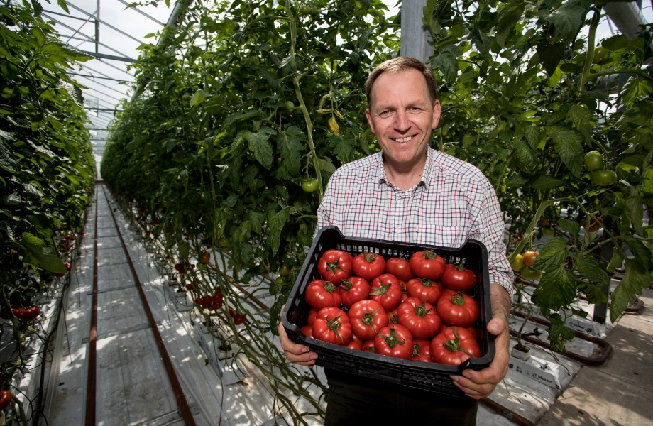 Goutini Tomatoes Launch