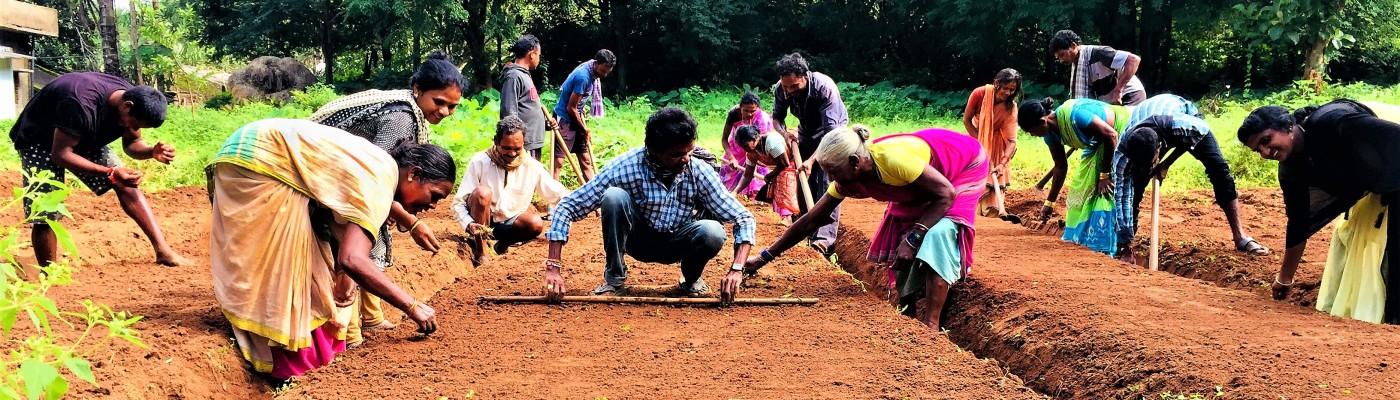 People farming in India
