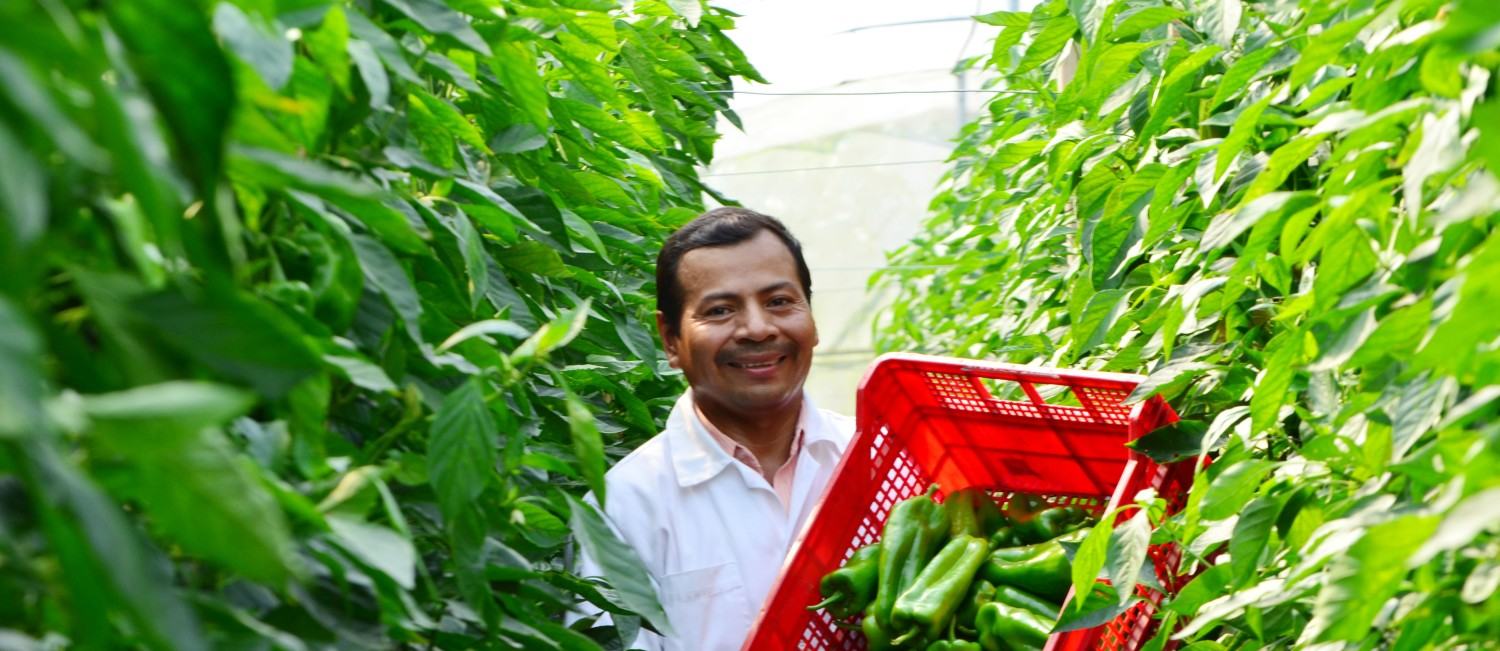 Central America sustainable agriculture