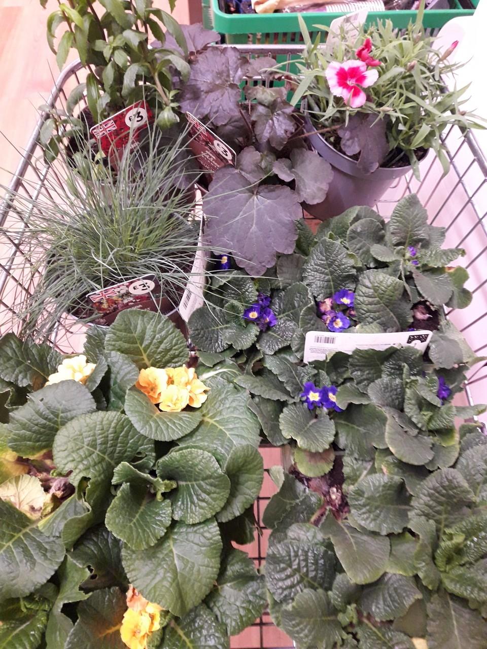 Plant donation | Asda Rawtenstall