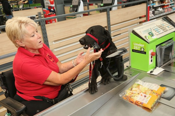 Assistance dog Paddy helps owner Jill on her weekly shops
