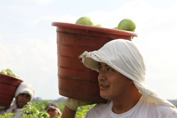 农场里,人们提着装满绿色农产品的水桶