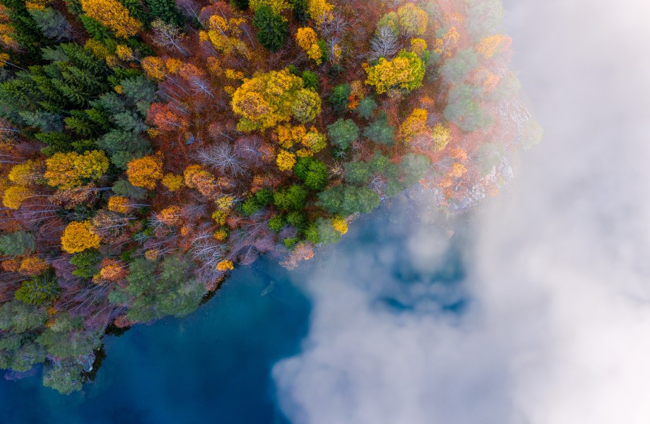 Overhead View of Forest with Fog