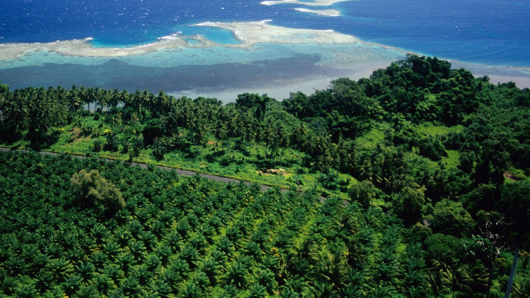 Natural Capital/oil-palm-plantation.jpg