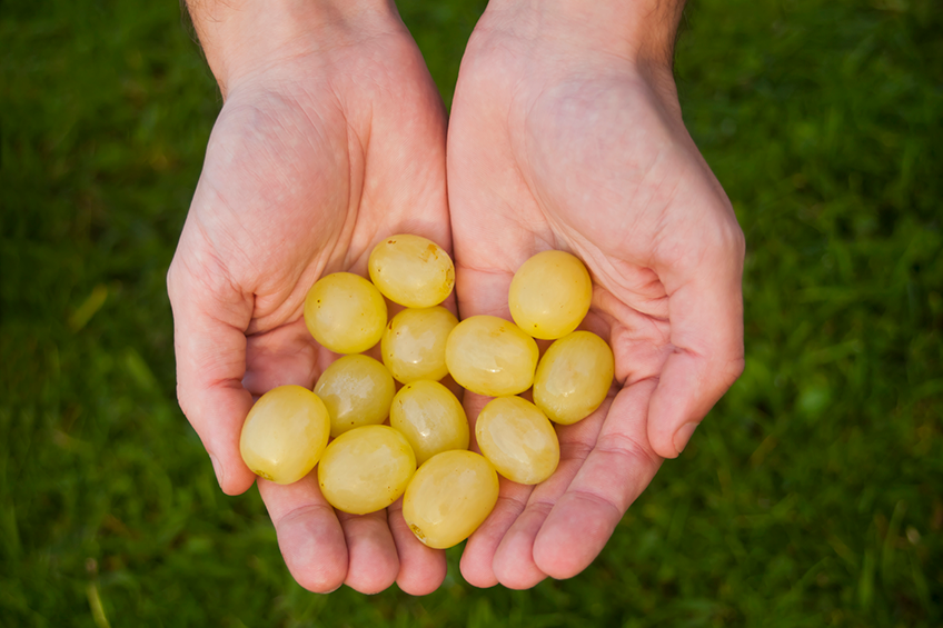 12 green grapes being held in two hands